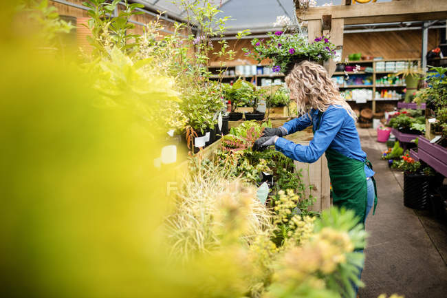 Beautiful woman checking potted plants in garden centre — Stock Photo