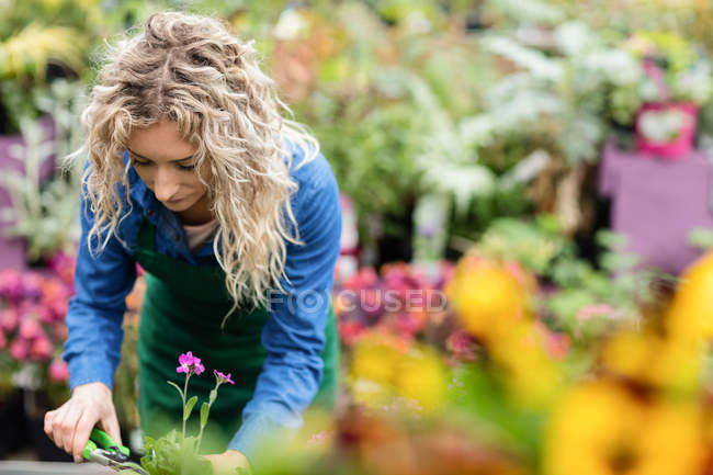 Female florist pruning plants with pruning shears in garden centre — Stock Photo