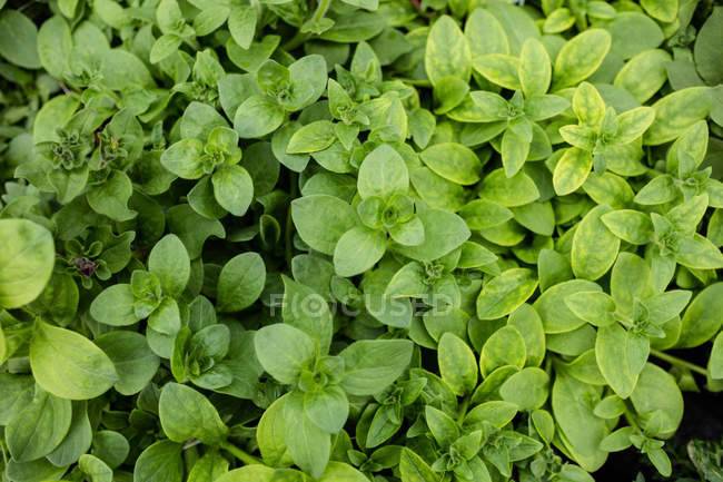 Close up of green leaves in garden center — Stock Photo