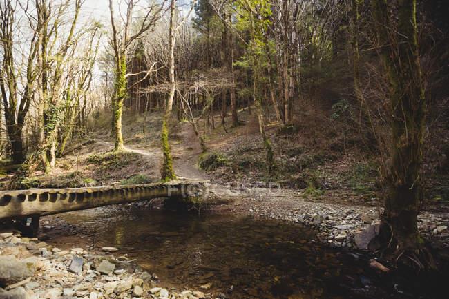 Pasarela sobre la corriente que fluye en el bosque - foto de stock