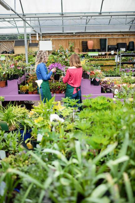 Две девушки флористов, проверка растений в садовый центр — стоковое фото