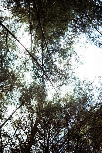 Vista de ângulo baixo de árvores na floresta — Fotografia de Stock