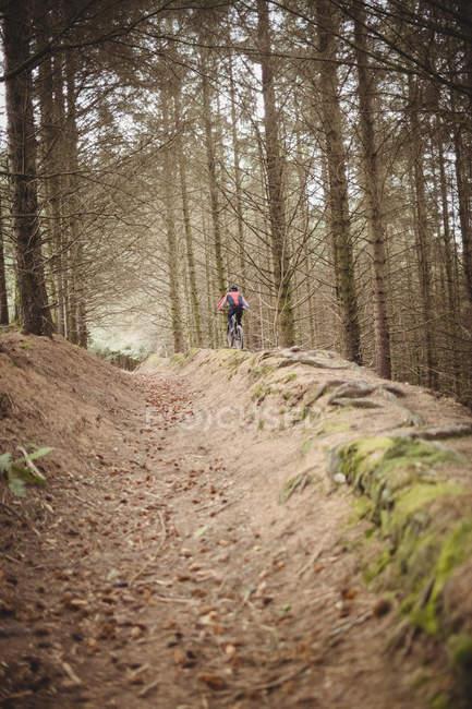 Fernsicht von Mountainbiker, der auf Feldweg im Wald fährt — Stockfoto