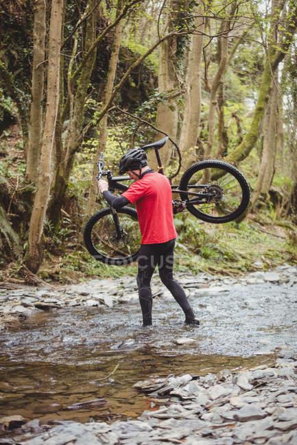 Задній вид байкер перевозять велосипед під час перетину потоку в лісі — стокове фото