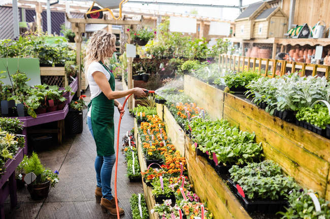 Florist spraying water on plants in garden centre — Stock Photo