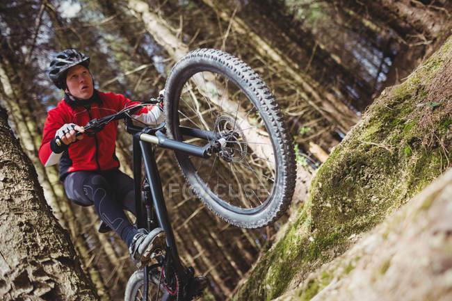 Низький кут зору чоловічого байкер стрибки з велосипедів у лісі — стокове фото