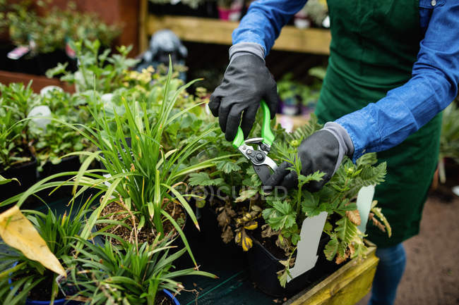 Cropped image of Female florist pruning plants with pruning shears in garden centre — Stock Photo