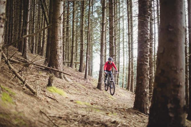 Полная длина горных велосипедистов в лесах — стоковое фото