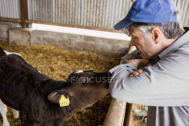 Vista laterale dell'uomo appoggiato sulla recinzione da vitello in fienile — Foto stock