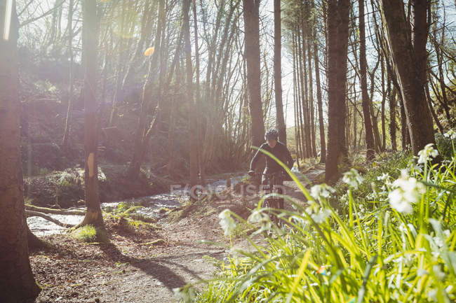 Mountain biker riding in woodland on sunny day — Stock Photo