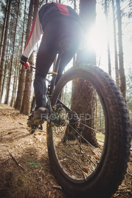 Rear view of mountain biker riding bicycle in woodland — Stock Photo