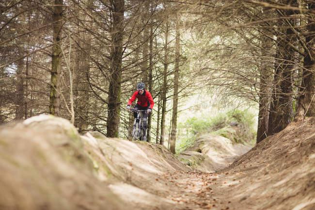 Maschio mountain bike equitazione su strada sterrata da alberi nella foresta — Foto stock