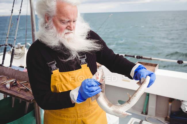 Fischer mit grauen Haaren hält Fisch auf Boot — Stockfoto