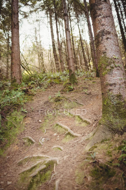 Low angle view of trees on land in forest — Stock Photo