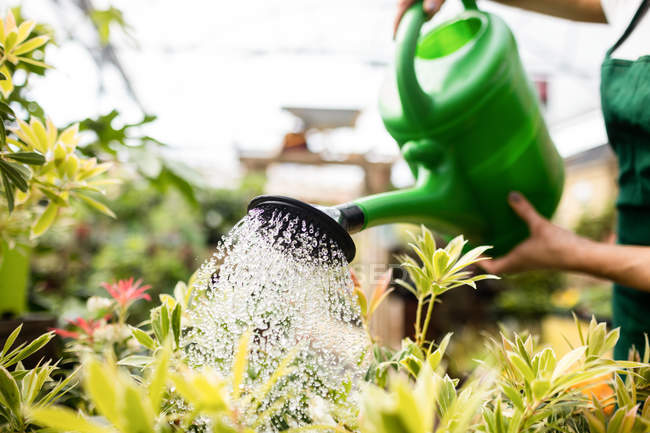 Cropped image of Female florist watering plants with watering can in garden centre — Stock Photo