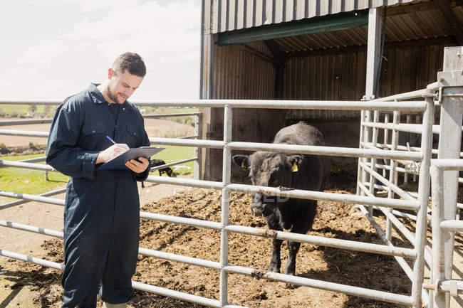 Работник фермы пишет в бумагах во время осмотра коровы в сарае — стоковое фото