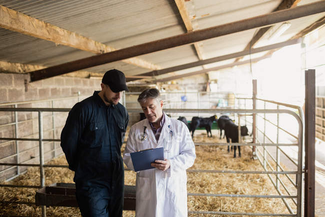 Veterinario che spiega l'agricoltore dalla recinzione nel fienile — Foto stock