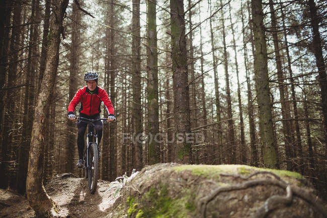 Гора байкер їзда по грунтовій дорозі серед дерев у лісі — стокове фото