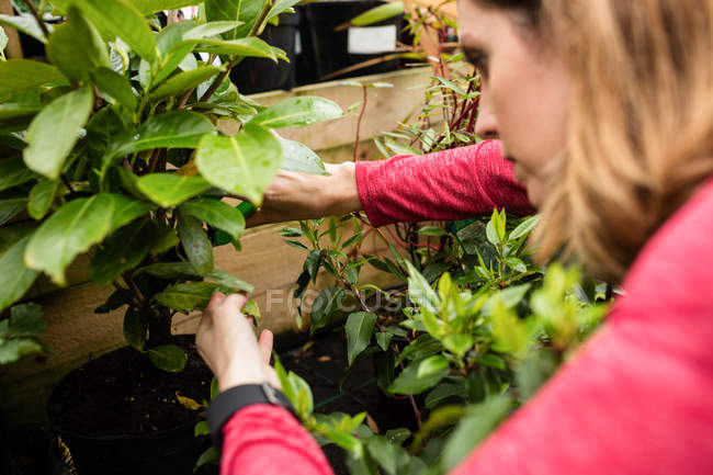 Female florist pruning plant with pruning shears in garden centre — Stock Photo