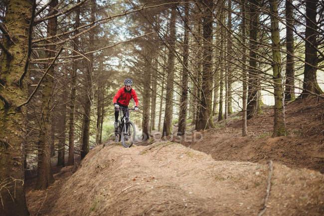 Езда на горном велосипеде по грунтовой дороге среди деревьев в лесу — стоковое фото