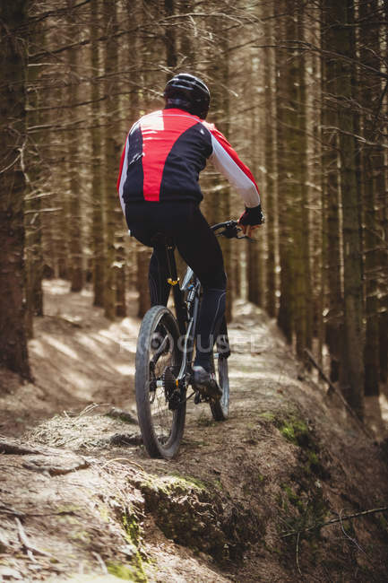 Задній вид на гори байкер їзда по грунтовій дорозі серед дерева в лісі — стокове фото