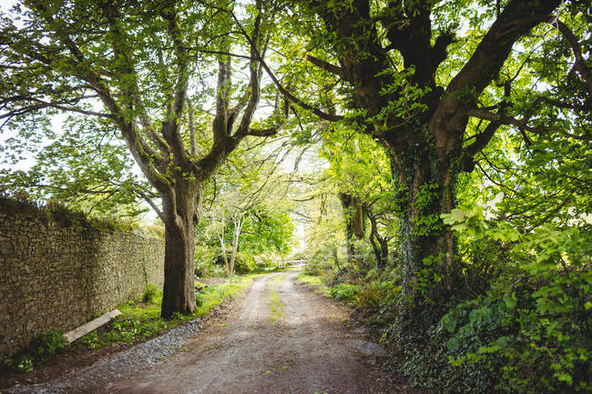 Тропинка среди деревьев в парке — стоковое фото