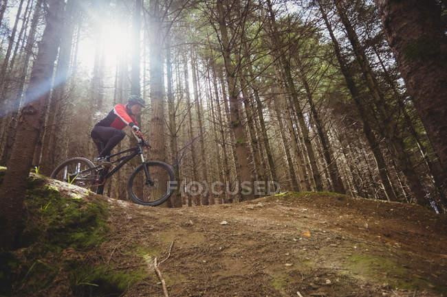 Вид с низкого угла на горного велосипедиста, едущего по грунтовой дороге за деревом в лесу — стоковое фото