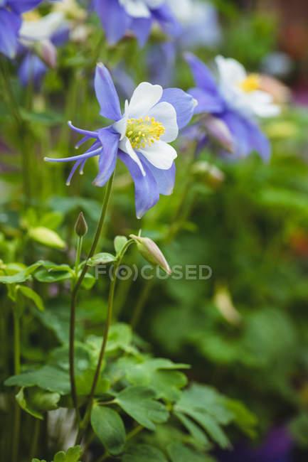 Крупним планом цвітіння квіти в садовому центрі — стокове фото