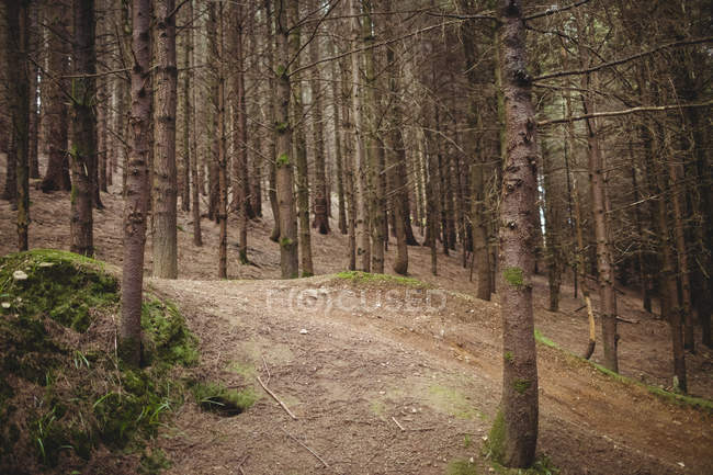 Trees on land in forest — Stock Photo