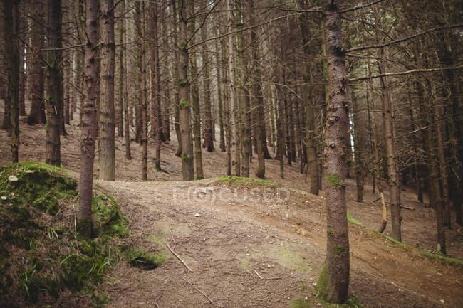 Деревья на земле в лесу — стоковое фото