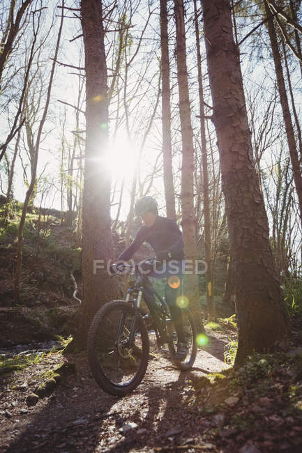 Mountain biker riding amidst tree in forest on sunny day — Stock Photo