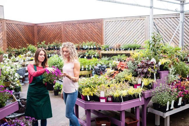 Флорист рассказывает женщине о растениях в садовом центре — стоковое фото