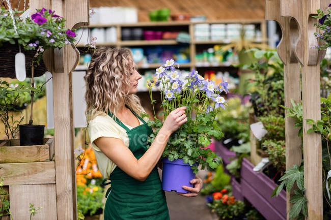 Female florist looking at potted plant in garden centre — Stock Photo