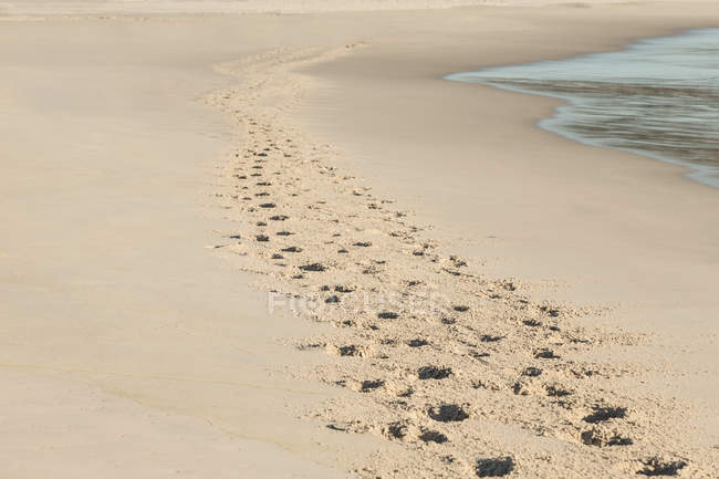Footprints in the sand am strand — Stockfoto
