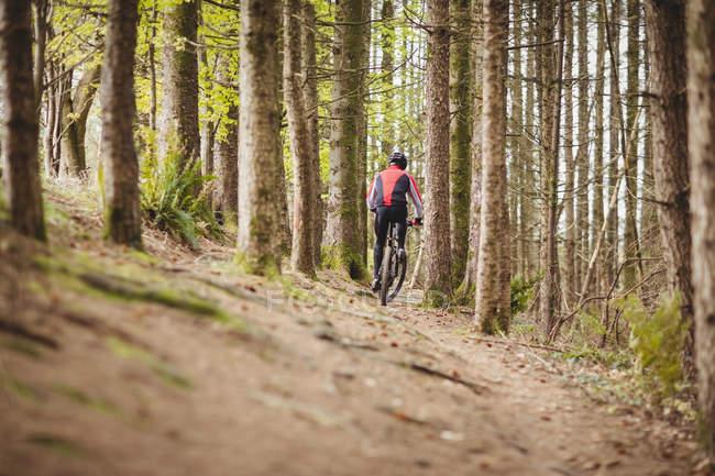 Blick von hinten auf Mountainbiker inmitten von Bäumen im Wald — Stockfoto
