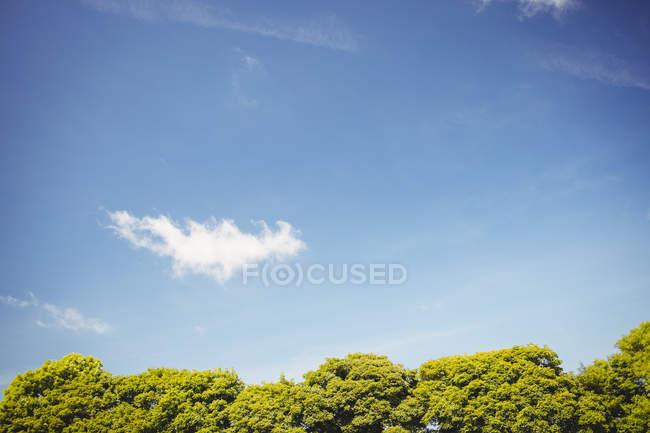 Folhagem de árvores verdes contra o céu azul — Fotografia de Stock