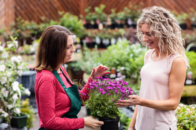 Флорист показывает цветы женщине в центре сада — стоковое фото