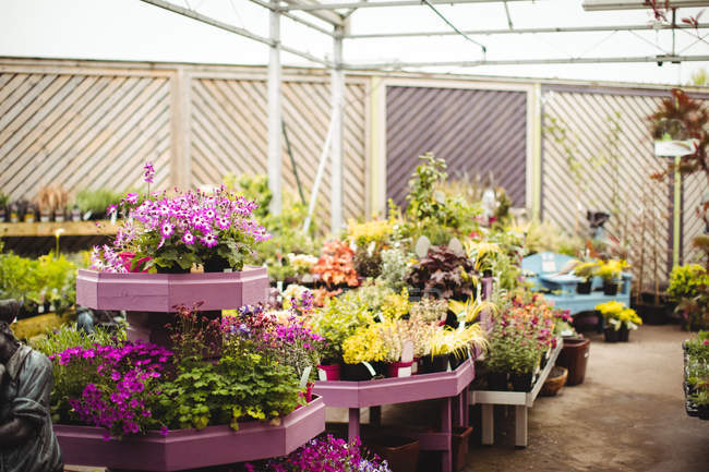 View of potted plants and flowers in garden centre — Stock Photo