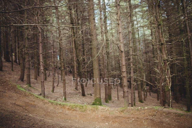 Trees on field in forest — Stock Photo