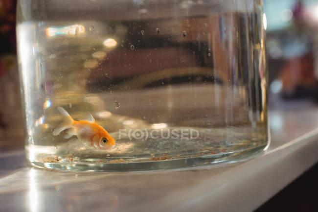 Close up de peixe dourado em frasco de vidro na loja — Fotografia de Stock