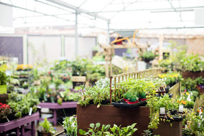View of potted plants in garden centre — Stock Photo
