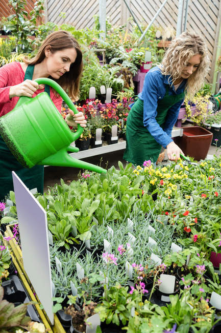 Female florists watering plants with watering can in garden centre — Stock Photo