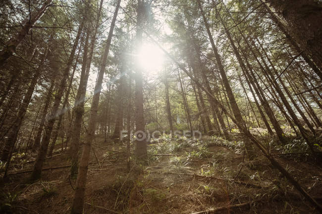 Низкий угол обзора деревьев в лесу в солнечный день — стоковое фото