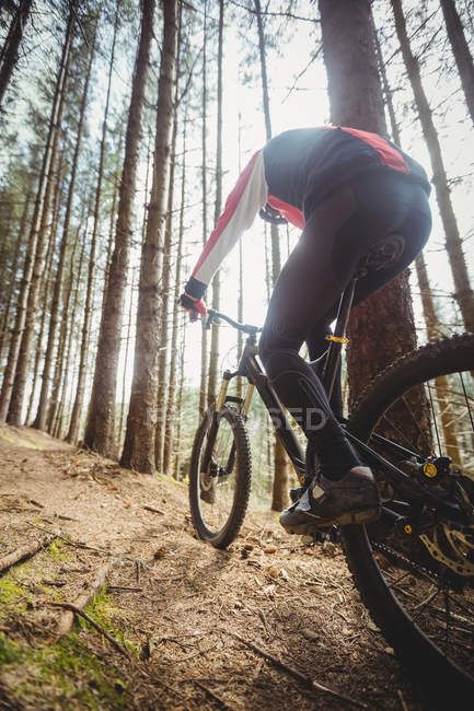 Rear view of mountain biker riding in woodland — Stock Photo