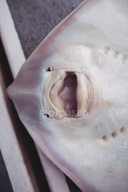 Primi piani dei morti ray pesce piano barca — Foto stock