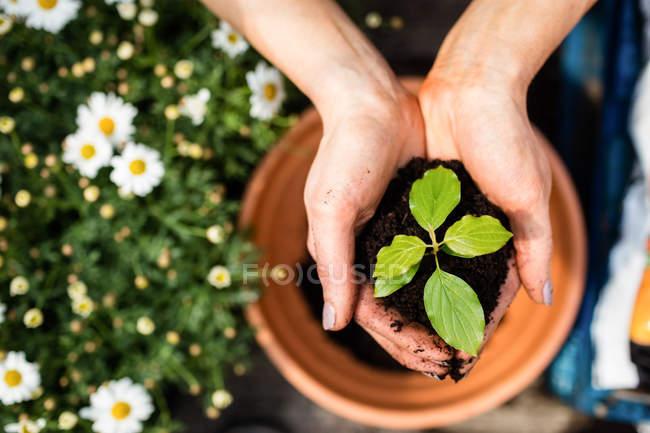 Immagine ritagliata del giardiniere che tiene la pianta con il terreno nelle mani nel centro del giardino — Foto stock