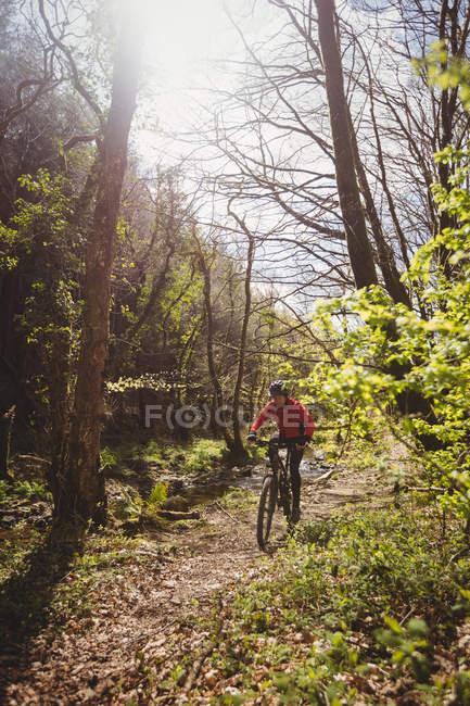 Катание на горном велосипеде среди деревьев в лесу — стоковое фото