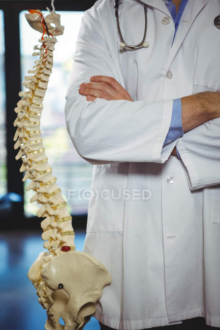 Midsection of physiotherapist standing beside spine model in clinic — Stock Photo