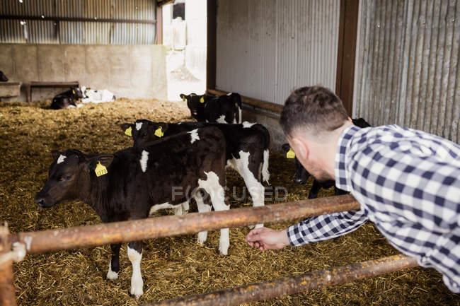 Homme de flexion sur la clôture à la grange — Photo de stock