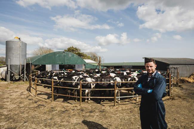 Portrait du travailleur agricole confiant debout contre les vaches à l'étable — Photo de stock